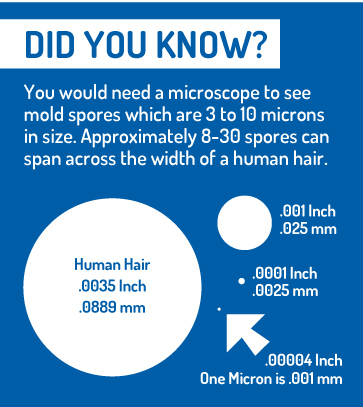 You would need a microscope to see mold spores which are 3 to 10 microns in size. Approximate 8-30 spores can span across the width of a human hair.